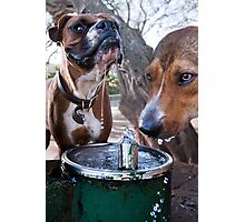 Dogs with game face on .30 Photographic Print