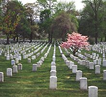 Arlington National Cemetery 6 by Kenshots