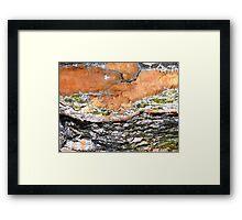 UNIQUE PATTERNS OF NATURE Framed Print