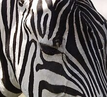 Striped by Anna Day