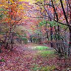 A Forest Path by NatureGreeting Cards ccwri