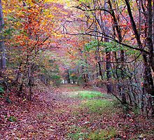 A Forest Path by NatureGreeting Cards ©ccwri