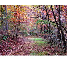A Forest Path Photographic Print