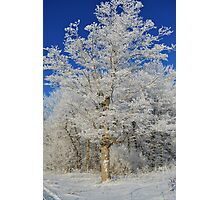Frost on Rural Trees Photographic Print
