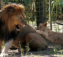 Get off me!! by Carol Bailey White