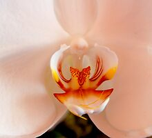 Orchid by Mike Powers