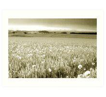 Poppy Field - Infra Red Art Print