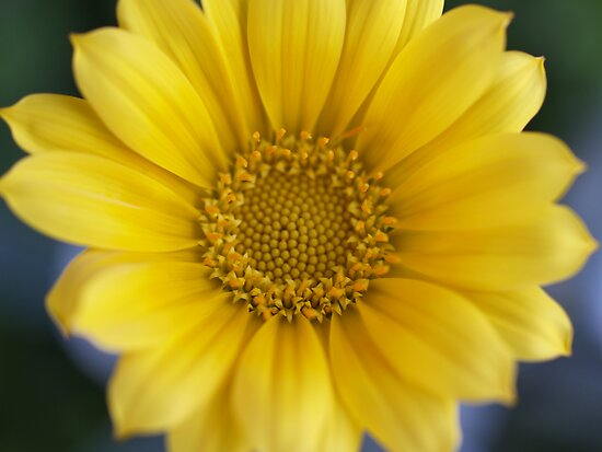 Yellow by Jo  Young