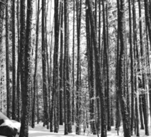 Winter Trees, Black and White Sticker