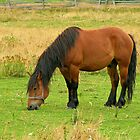 Horse eating in the field by claudiu