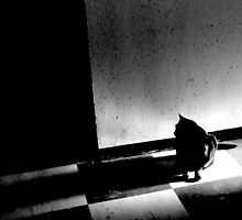 Looking into the shadows by emmar