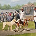 Quorn Hunt Puppy Show 2008 by Barry Thomas