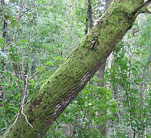 Fallen Tree In The Old Forest by HELUA