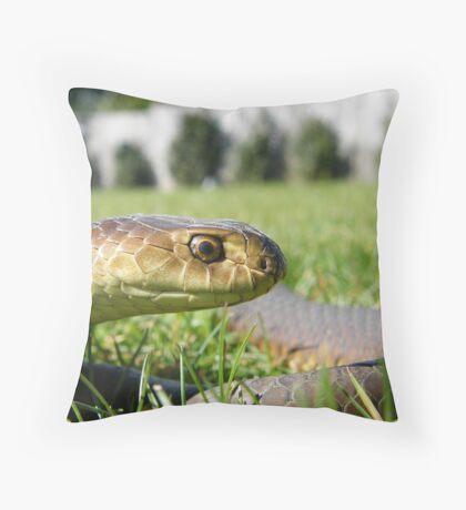 Austrelaps superbus Lowlands copperhead  Throw Pillow