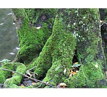River Valley - Green and Mossy Photographic Print