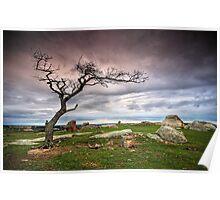 Dog Rocks Tree Poster