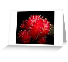 The Red Cactus Greeting Card
