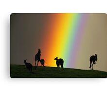 Kangaroos and Rainbow at Kangaroo Ground, Yarra Valley. Canvas Print