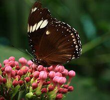 Butterfly III by Damienne Bingham