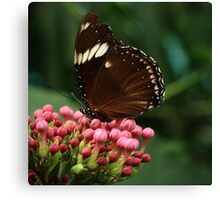 Butterfly III Canvas Print