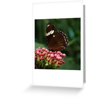 Butterfly III Greeting Card