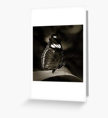 Butterfly V Greeting Card