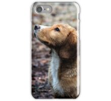 Spaniel Pup iPhone Case/Skin