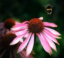 Buzz by Damienne Bingham