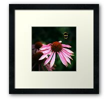Buzz Framed Print