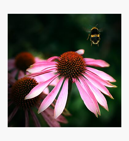Buzz Photographic Print