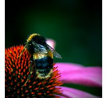 Buzz III Photographic Print