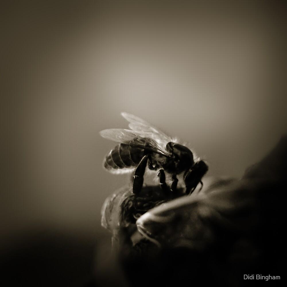 Buzz VI by Damienne Bingham