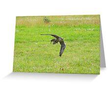 Falcon in flight........  Greeting Card