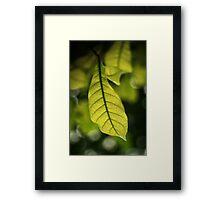 Colour Of Life XV Framed Print