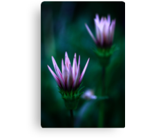 Colour Of Life XVI [Print & iPad Case] Canvas Print