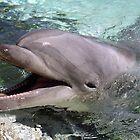 Delightful Dolphins! by Kristin Nichole Hamm