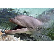 Bottlenose Dolphin Photographic Print