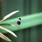 Little Butterfly by Kristin Nichole Hamm