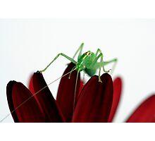 Grass-hopper Photographic Print