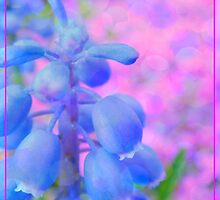 Blue Bells by Eugenio