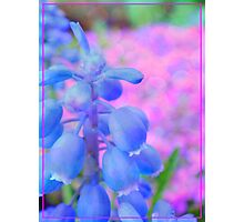 Blue Bells Photographic Print