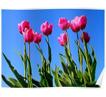 Tulips in the Sky.. Poster