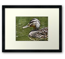 Cruisin' on the water Framed Print