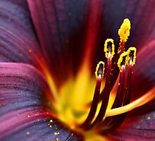Purple Lily by Sophie Matthews
