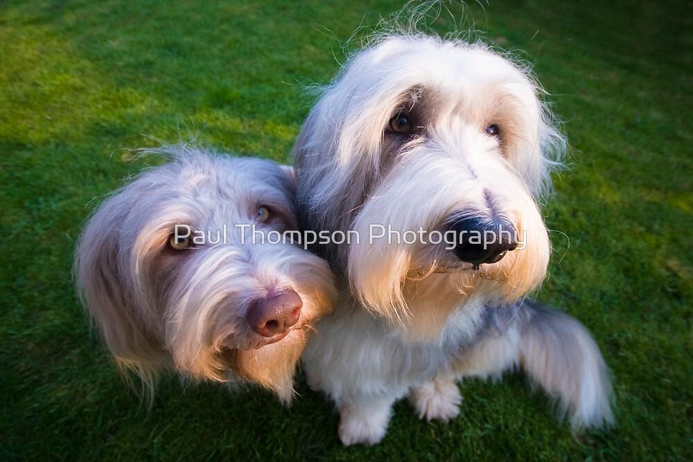 Bailey & Skye by Paul Thompson Photography