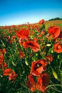Lincolnshire poppies by Paul Thompson Photography