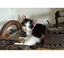 vintage cat Photographic Print