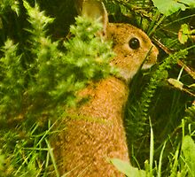 Rabbit by Kenart