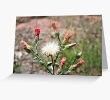 pink and white, northern Arizona Greeting Card