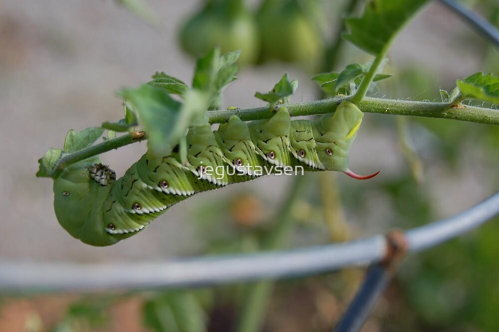 The tomato worm... by jegustavsen
